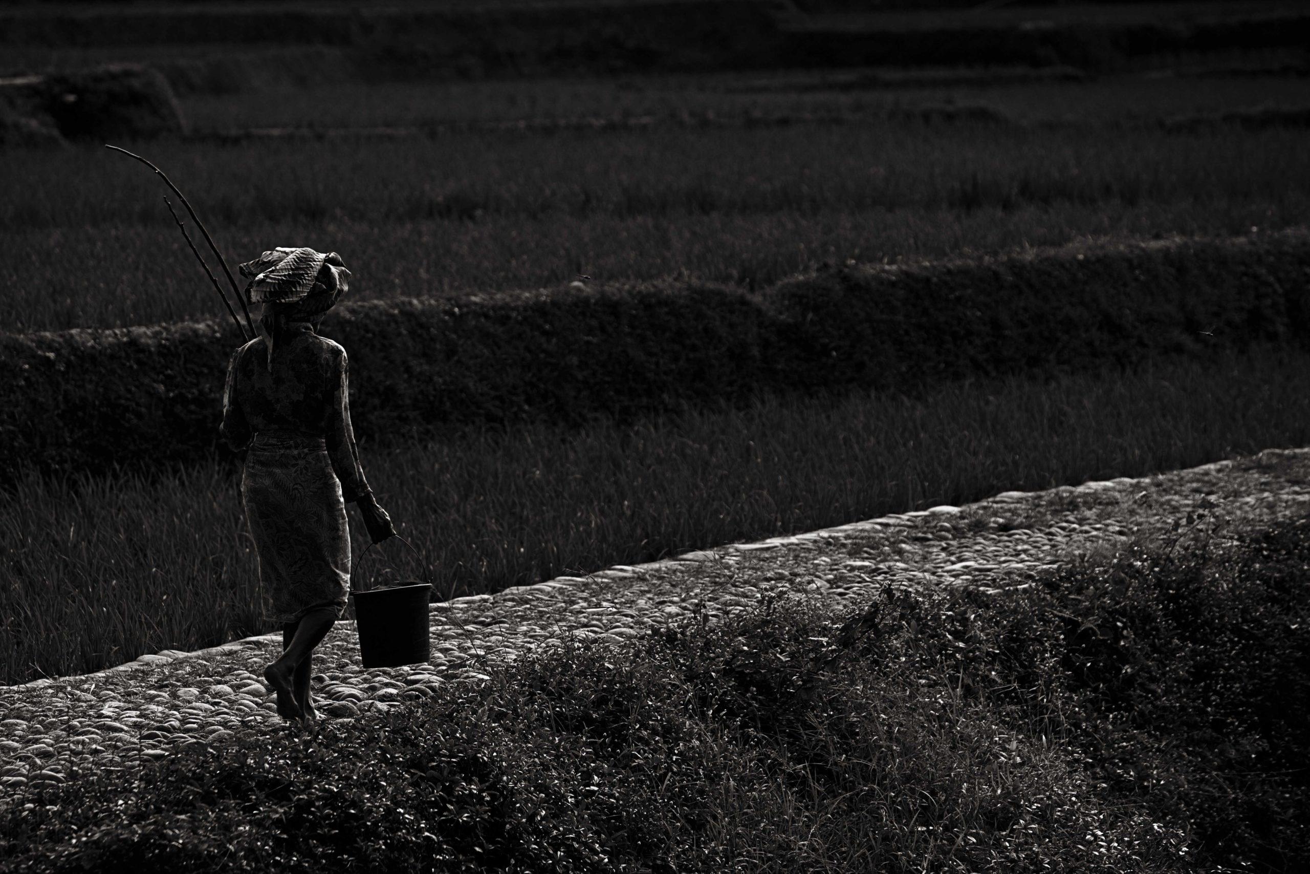 Indonesian Landscape 53