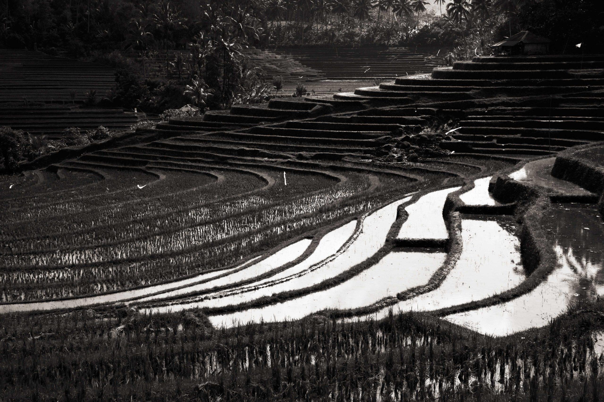 Indonesian Landscape 68