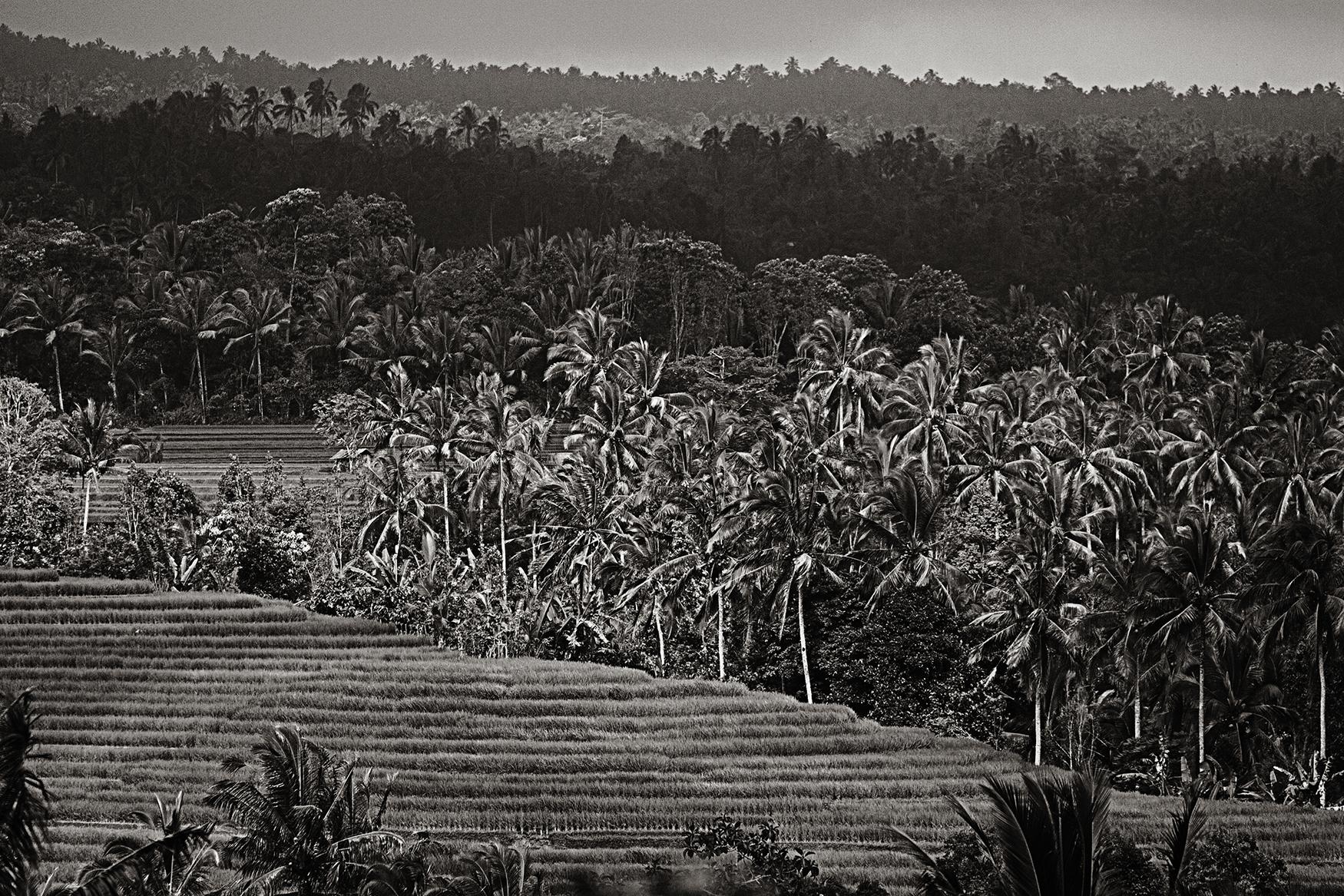 Indonesian Landscape 08