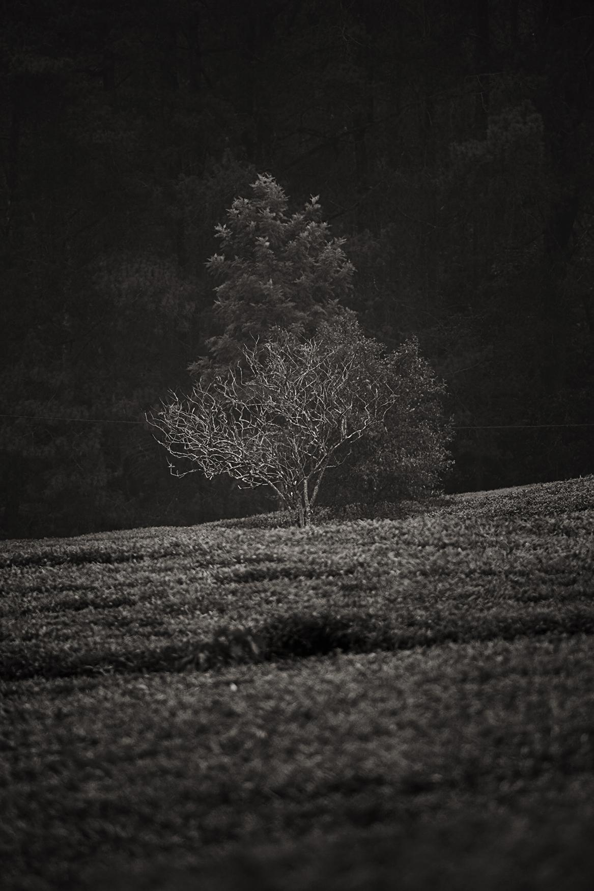 Indonesian Landscape 61
